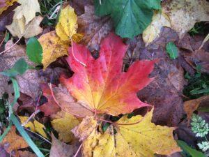 Haustblad i mange fargar, foto
