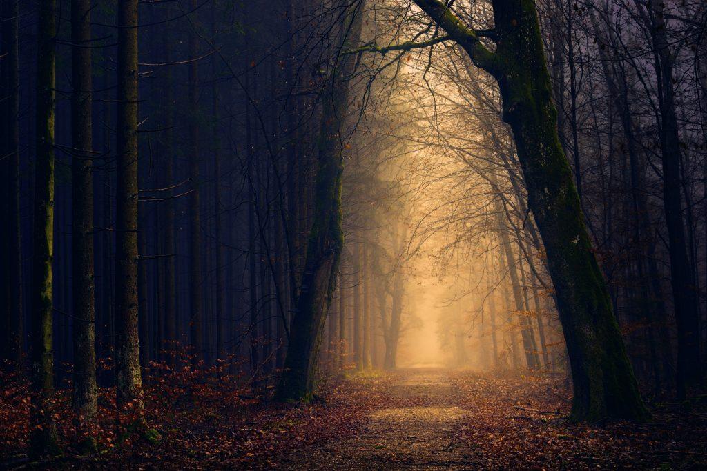 Mørk skog med lysning gjennom. Foto.